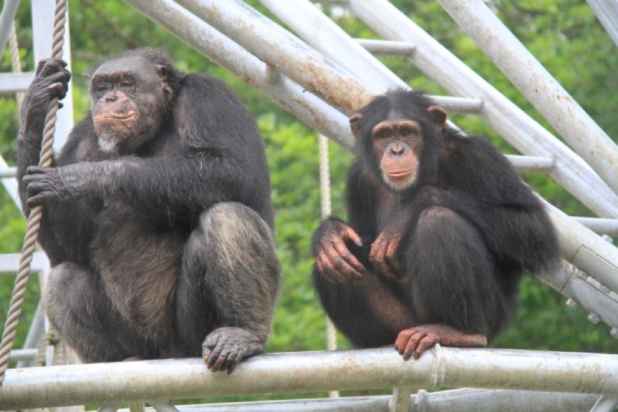 猿の画像:目からウロコの耳より情報局