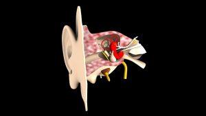 耳の画像2:目からウロコの耳寄より情報局