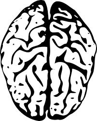 右脳と左脳:目からウロコの耳より情報局